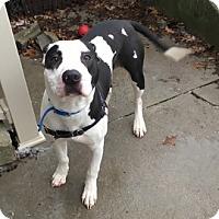 Adopt A Pet :: Madden - Janesville, WI