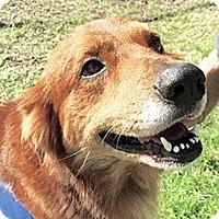 Adopt A Pet :: Camo - BIRMINGHAM, AL