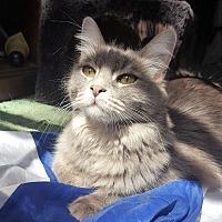 Adopt A Pet :: Ashleigh - Monrovia, CA