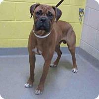 Adopt A Pet :: Popper - Denver, CO
