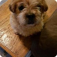 Adopt A Pet :: Darla - Conway, AR