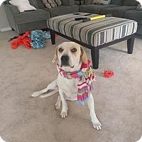 Adopt A Pet :: Zip - Broken Arrow, OK