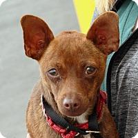 Adopt A Pet :: Mini - Palmdale, CA