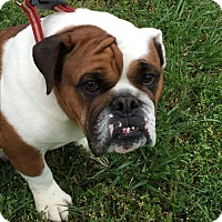 Adopt A Pet :: Dolly - Pulaski, TN