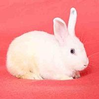 Adopt A Pet :: COSMO - Los Angeles, CA