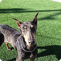 Adopt A Pet :: Kendra - Sun Valley, CA
