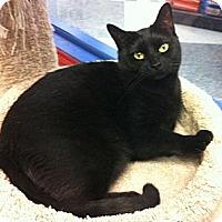 Adopt A Pet :: Carmen - Warminster, PA