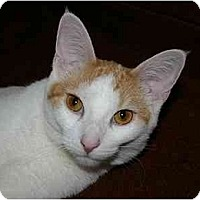 Adopt A Pet :: Fergie - Montgomery, IL
