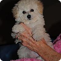 Adopt A Pet :: Allie - ORANGE COUNTY, CA