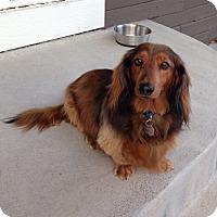 Adopt A Pet :: Yukon Red - Louisville, CO