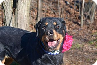 Rottweiler Mix Dog for adoption in New York, New York - Bella