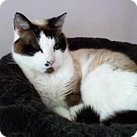 Adopt A Pet :: Owen - N. Billerica, MA