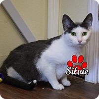 Adopt A Pet :: Silvie - Canastota, NY
