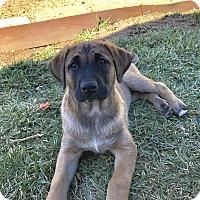 Adopt A Pet :: Tina - Mission Viejo, CA