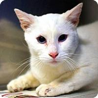 Adopt A Pet :: Giorgio - Pinckney, MI