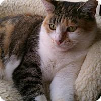 Adopt A Pet :: Claudia - West Palm Beach, FL