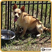 Adopt A Pet :: Hannah - DeForest, WI
