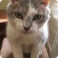 Adopt A Pet :: Grace Ann - Lambertville, NJ