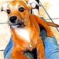 Adopt A Pet :: Bugsy - San Diego, CA