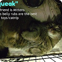 Adopt A Pet :: squeak - Muskegon, MI