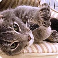 Adopt A Pet :: Zimbuku - Kalamazoo, MI