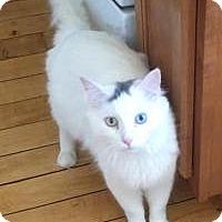 Adopt A Pet :: Albie - Worcester, MA