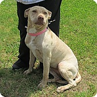 Adopt A Pet :: Aynsley - Kingwood, TX