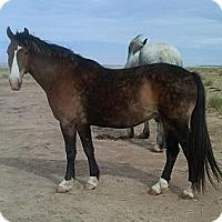 Adopt A Pet :: Logan - Larskpur, CO