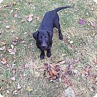 Adopt A Pet :: Delta - New Boston, MI