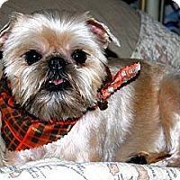 Adopt A Pet :: GIRLIE - ADOPTION PENDING - Little Rock, AR