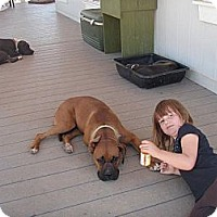 Adopt A Pet :: Tuff, LOVES KIDS - Sacramento, CA