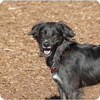 Adopt A Pet :: Rocky - Ft. Myers, FL