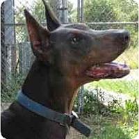 Adopt A Pet :: Tia--adopted! - New Richmond, OH