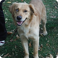 Adopt A Pet :: Paddington - Hamilton, ON