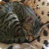 Adopt A Pet :: Mike - Edmonton, AB