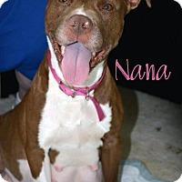 Adopt A Pet :: Nana - Cary, IL