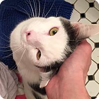 Adopt A Pet :: Bubbles - Chicago, IL