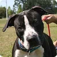 Adopt A Pet :: Gunnar - Lawrenceville, GA