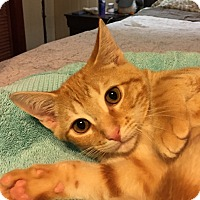 Adopt A Pet :: Tyler - Simpsonville, SC