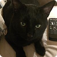 Adopt A Pet :: Jet - Roseburg, OR