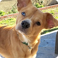 Adopt A Pet :: Jiminy - San Pedro, CA