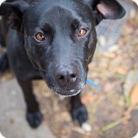 Adopt A Pet :: Roofus - Houston, TX