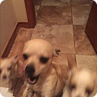 Adopt A Pet :: Paco - Blanchard, OK