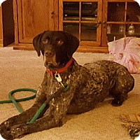 Adopt A Pet :: Lugar - Alma, WI