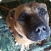 Adopt A Pet :: Buster - Williston, FL