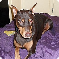 Adopt A Pet :: Adrian--adopted!! - New Richmond, OH
