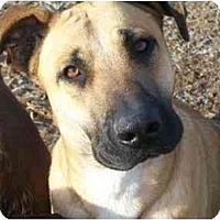 Adopt A Pet :: Marma - Albany, NY