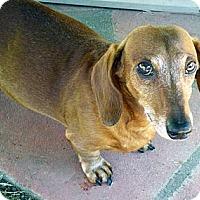 Adopt A Pet :: Romeo 2 - San Jose, CA