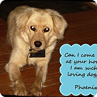 Adopt A Pet :: Phoenix - Franklinton, NC