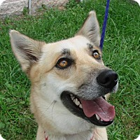 Adopt A Pet :: Vixie - Erwin, TN
